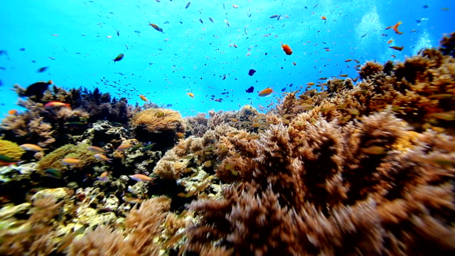 Coral And Fish Full HD Coral And Fish scuba diving stock videos & royalty-free footage