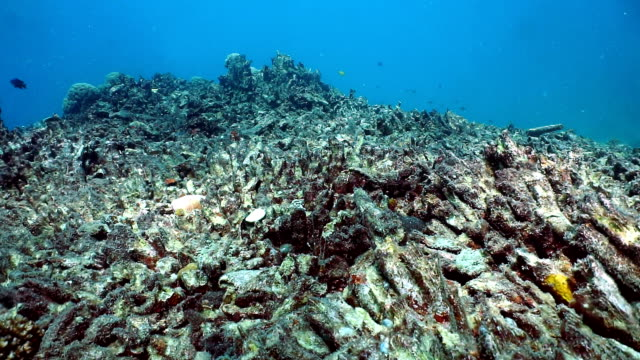 coral bleaching, damaged fragile reef ecosystem - morte video stock e b–roll