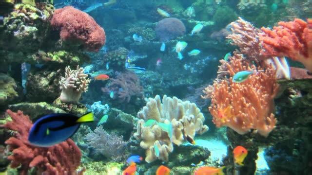 coral colony on the reef - akvarium byggnad för djur i fångenskap bildbanksvideor och videomaterial från bakom kulisserna