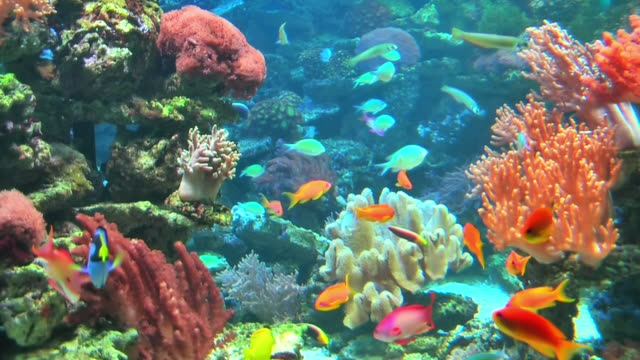 Coral colony on the reef  hard coral stock videos & royalty-free footage