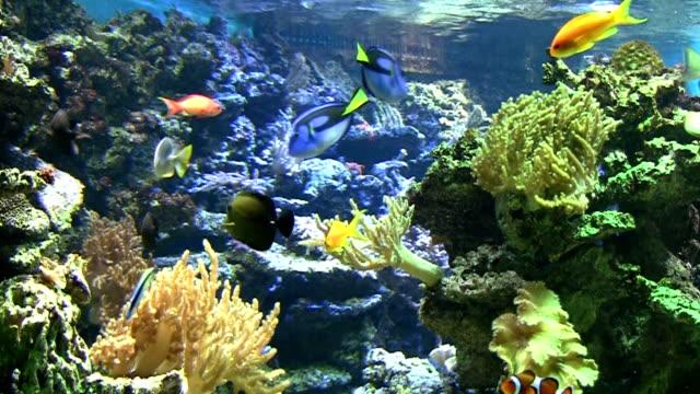 coral colony - akvarium byggnad för djur i fångenskap bildbanksvideor och videomaterial från bakom kulisserna