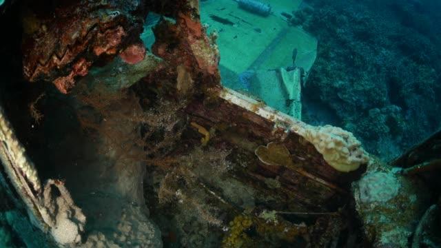 vídeos y material grabado en eventos de stock de corales crecen en pecio submarino hidroavión de wwii, palau - micronesia