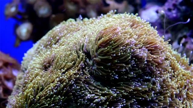 coral in aquarium video