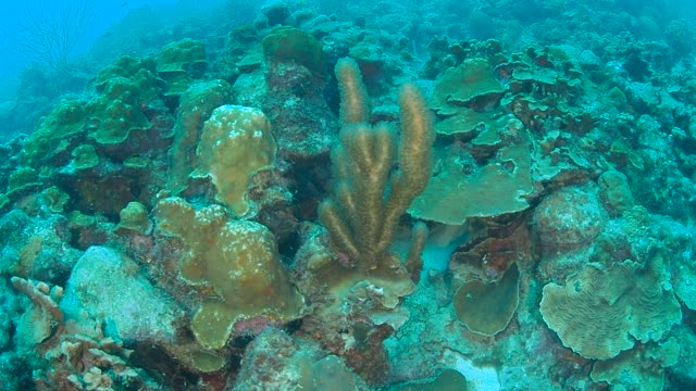 coral life caribbean sea Bonaire island underwater diving  1080P video coral life caribbean sea Bonaire island underwater diving  1080P video leeward dutch antilles stock videos & royalty-free footage