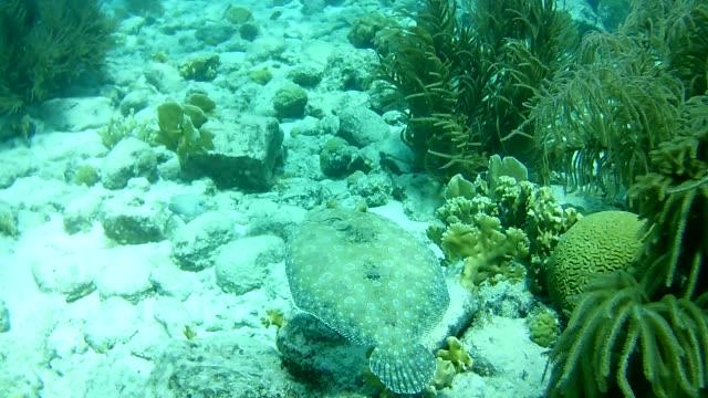 coral life caribbean sea Bonaire island underwater diving divers video video