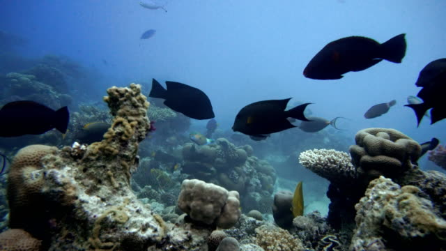 Coral reef and beautiful fish.  Underwater life in the ocean.  Reef and beautiful fish. video