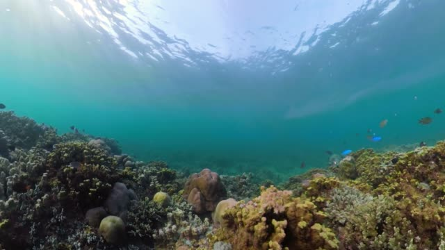 Coral reef and tropical fish tropical fish and coral reef. underwater world diving and snorkeling on coral reef. Hard and soft corals underwater landscape hard coral stock videos & royalty-free footage