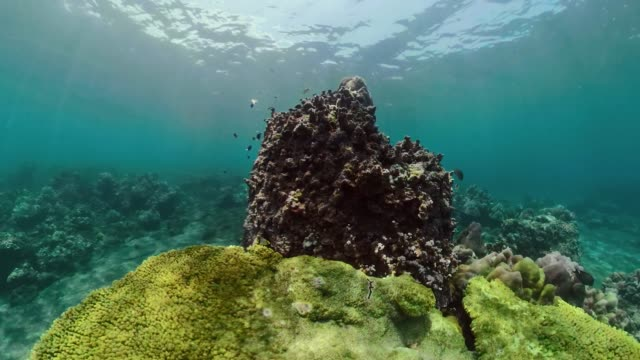 Coral reef and tropical fish tropical fish and coral reef underwater world diving and snorkeling on coral reef. Hard and soft corals underwater landscape hard coral stock videos & royalty-free footage