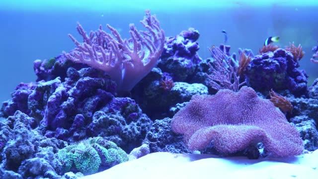coral reef aquarium with exotic fish. - морская рыба стоковые видео и кадры b-roll