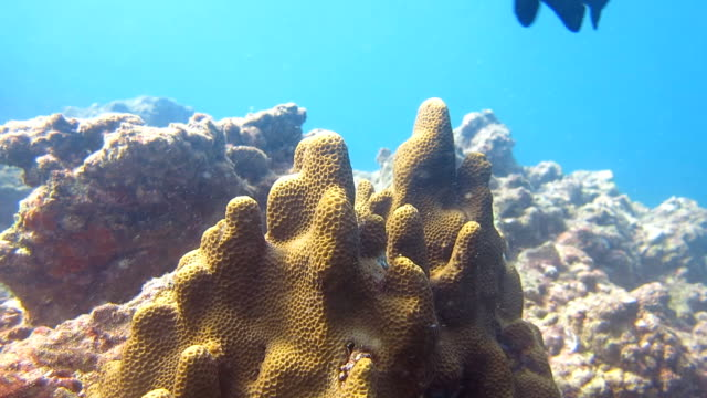 Coral Reef Bleaching on Damaged Fragile Ecosystem Ocean Environment video