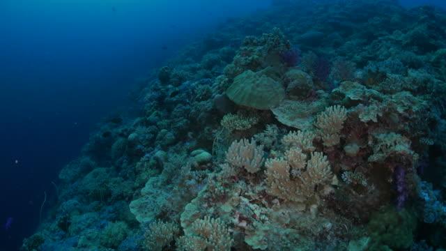 vídeos y material grabado en eventos de stock de arrecife de coral, mar, palau - zona pelágica
