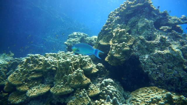 Coral Reef Fragile Ecosystem Ocean Environment. Koh Haa, Krabi, Thailand. video