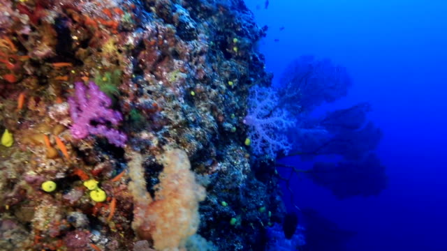 Coral reef in Fiji video