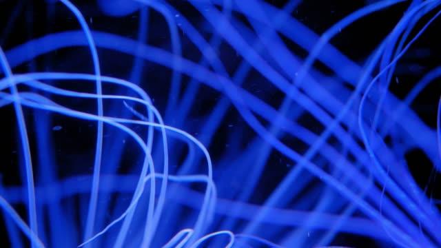 korall rev polyp long blue tentakler utfodring - djurarm bildbanksvideor och videomaterial från bakom kulisserna