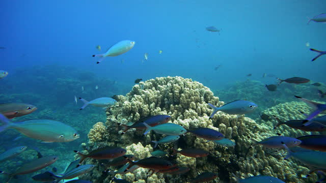Coral reef. The marine life of tropical fish. Video under water. video