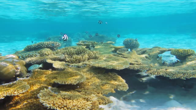 Coral reef & Tropical fish video