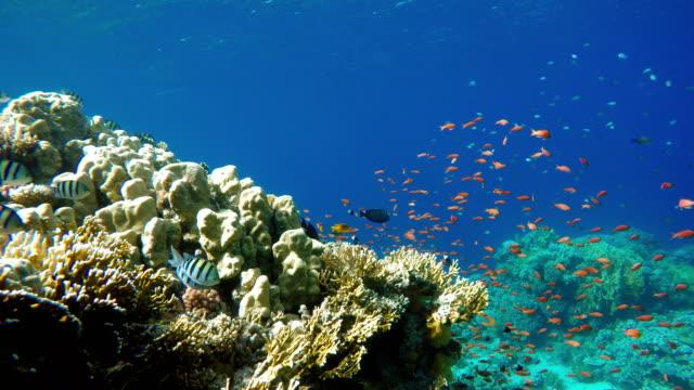珊瑚礁,熱帶魚。溫暖的海洋和清澈的水。水下世界 - 海中 個影片檔及 b 捲影像