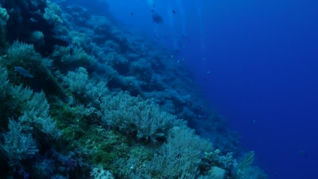 vídeos y material grabado en eventos de stock de pared de arrecife de coral submarinos - palaos