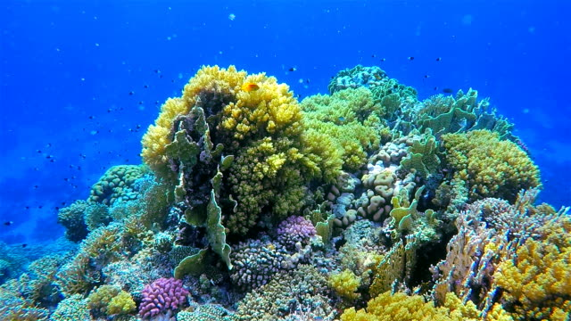 Coral reef with on Red Sea / Egypt / Marsa Alam video