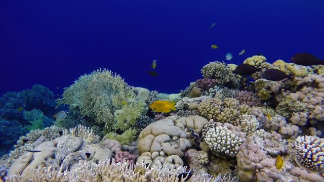 Coral reefs and tropical fish. Beautiful tropical fish and coral reef.м video