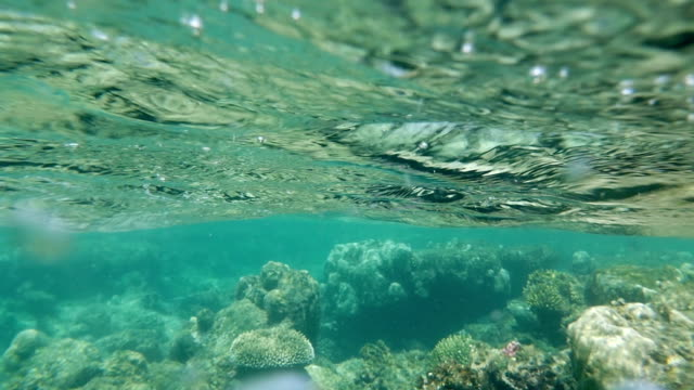 barriera corallina in acque poco profonde mare - sky diving video stock e b–roll