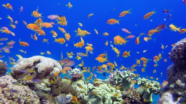 Coral Reefs Seascape video
