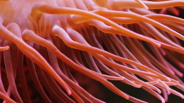 Coral  coral cnidarian stock videos & royalty-free footage