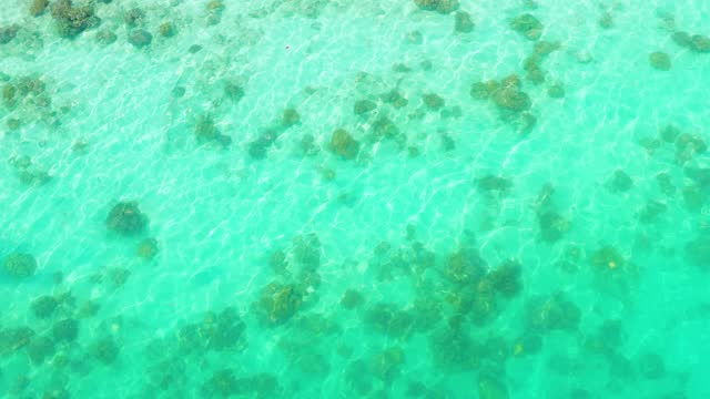 Corals in clear blue sea water