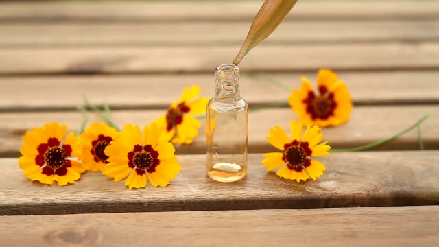 coreopsis essential oil in  beautiful bottle on table - coreopsis lanceolata video stock e b–roll