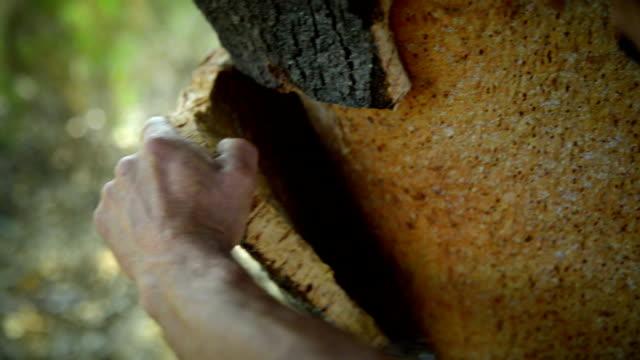 Cork harvest video