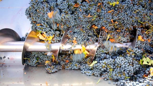 corkscrew crusher destemmer winemaking with grapes video