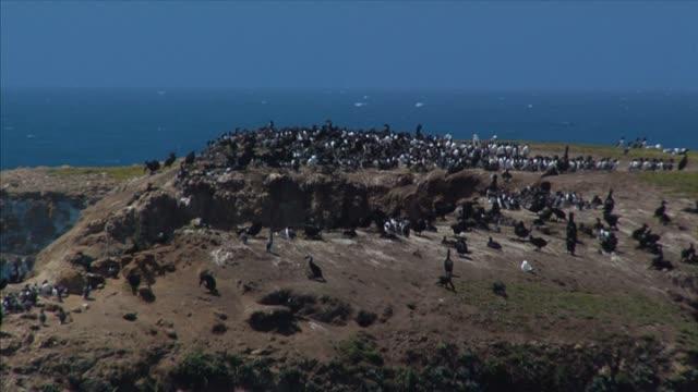 kormoran rookery - zachowanie zwierzęcia filmów i materiałów b-roll