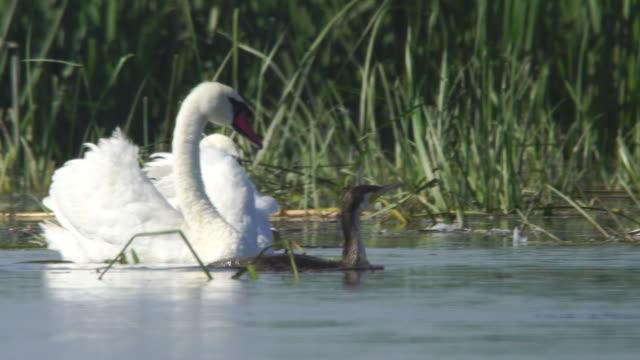 Cormorants (Phalacrocorax carbo) and other birds