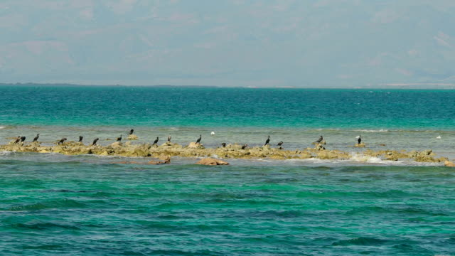 Cormorants and Seagulls on Cayo Blanco, Cuba video
