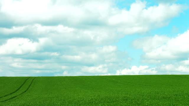 Corn Field und bewölkten Himmel TL (4 k UHD zu/HD) – Video