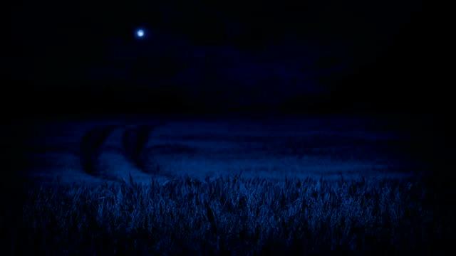 vídeos de stock e filmes b-roll de corn field in the moonlight - vídeos de milho