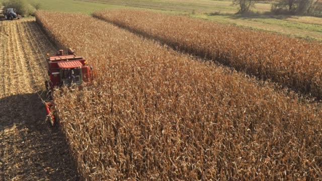 AERIAL Corn harvester harvesting in sunshine