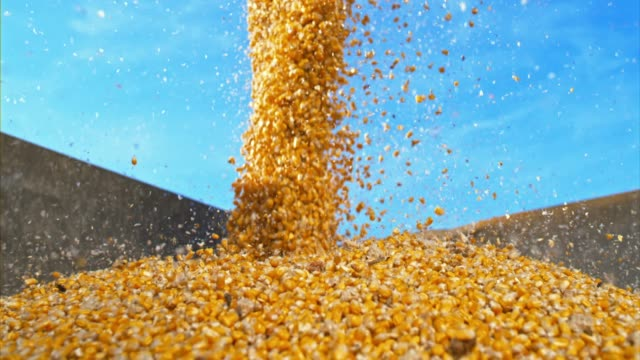 SLO MO DS Corn kernels falling into container