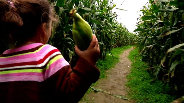 Corn Maze video