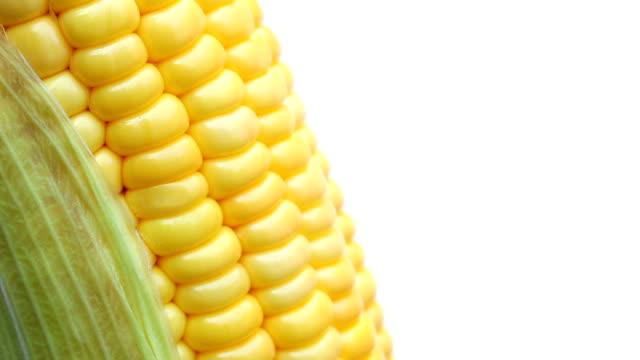 majs på isolerade vit - skalhylsa bildbanksvideor och videomaterial från bakom kulisserna
