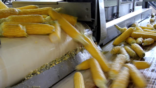 Corn processing factory video