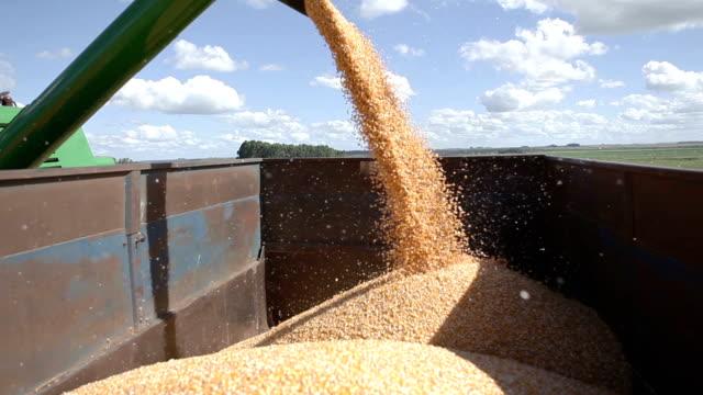 corn 1080 30p harvesting stock videos & royalty-free footage