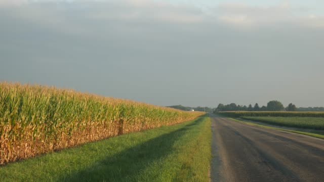Cornfield beside a rural road video