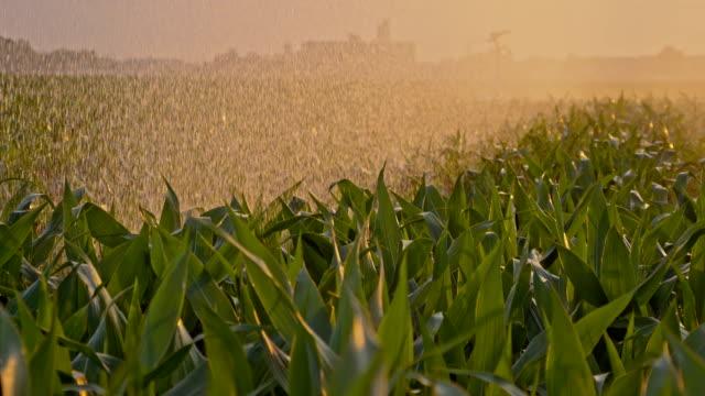 SLO MO Cornfield irrigated by a rain gun video