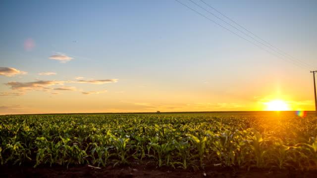 vidéos et rushes de laps de temps de plantation champ de maïs - maïs culture