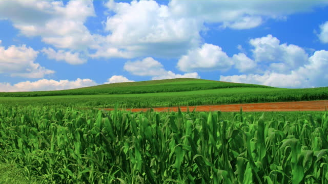Cornfields and Hill video
