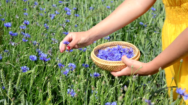 cornflower blossom pick video