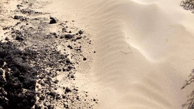 Corralejo sandy beach - Fuerteventura video