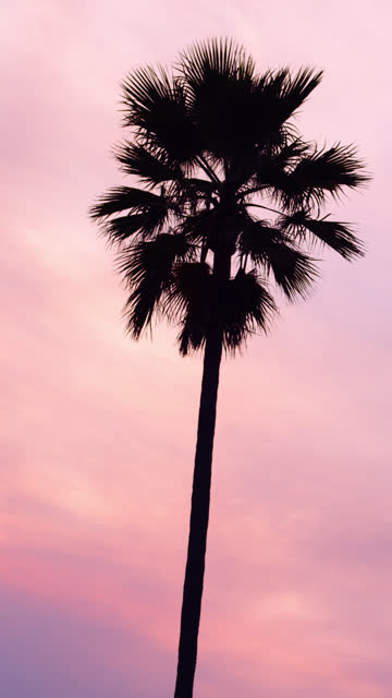 Cotton Candy Palm Trees