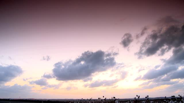 cotton field tilt sunset video